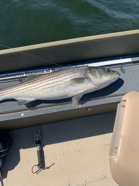 Striper Fishing the Merrimack River